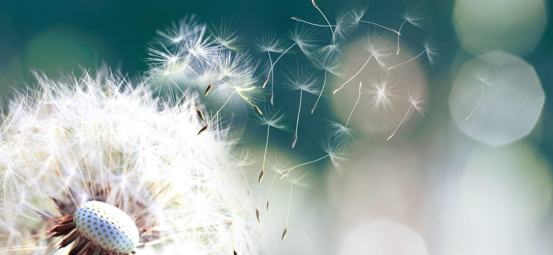 Rhume des foins, pollens, graminées. Et si la solution était dans le microbiote? EN