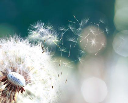 Rhume des foins, pollens, graminées. Et si la solution était dans le microbiote?