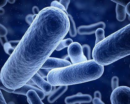 PROBIOTIQUES : ces bactéries qui vous veulent du bien !